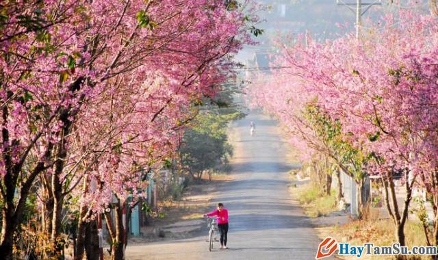 Chia sẻ kinh nghiệm du lịch Đà Lạt tự túc giá rẻ 2020 + Hình 5