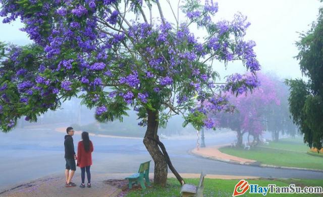 Chia sẻ kinh nghiệm du lịch Đà Lạt tự túc giá rẻ 2020 + Hình 7